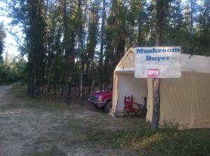 A commercial mushroom buyer's shack.