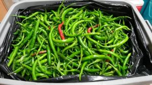 35lbs of chilis harvested from the Experimental Farm, Purchased by Chartwells Sept. 2014
