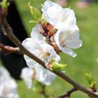 vermont flower