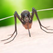 illustration-of-a-mosquito-biting-royalty-free-illustration-1124679781-1556840632